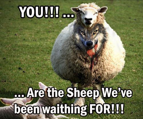 Sheeple 3